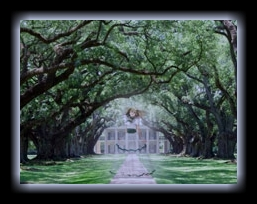 Mansion_Behind_Long_Treed_Driveway