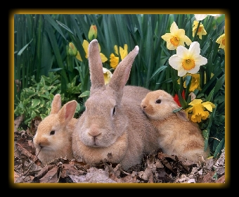 Mother Rabbit and her bunnies